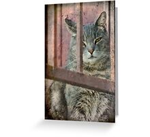 I Know You Can't See Me! Greeting Card