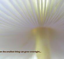 Even the smallest thing can grow overnight... by Deanna Roberts Think in Pictures