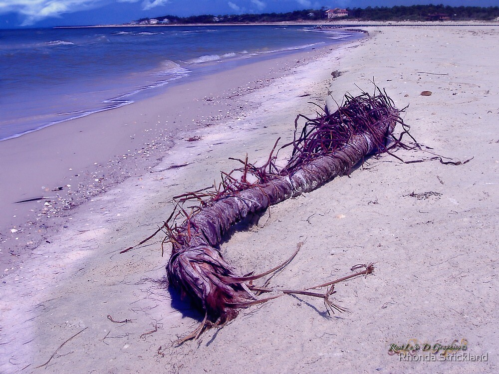 St. Vincent Island Driftwood by Rhonda Strickland