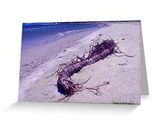 St. Vincent Island Driftwood Greeting Card