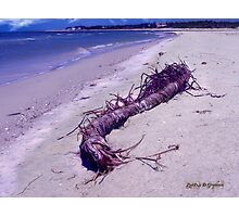 St. Vincent Island Driftwood Photographic Print
