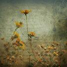 Desert Flowers by Susanne Correa
