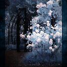 Midnight Garden by Ant Vaughan