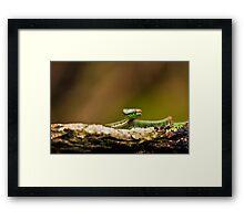 Pit Viper Framed Print
