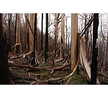 after the fire Photographic Print