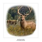 BACTRIAN DEER by DilettantO