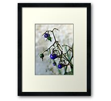 Blue Berries For Christmas Framed Print