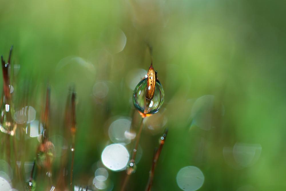 Emerald Glow by Sharon Johnstone