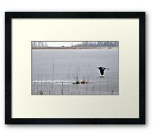 Icy Flight Framed Print