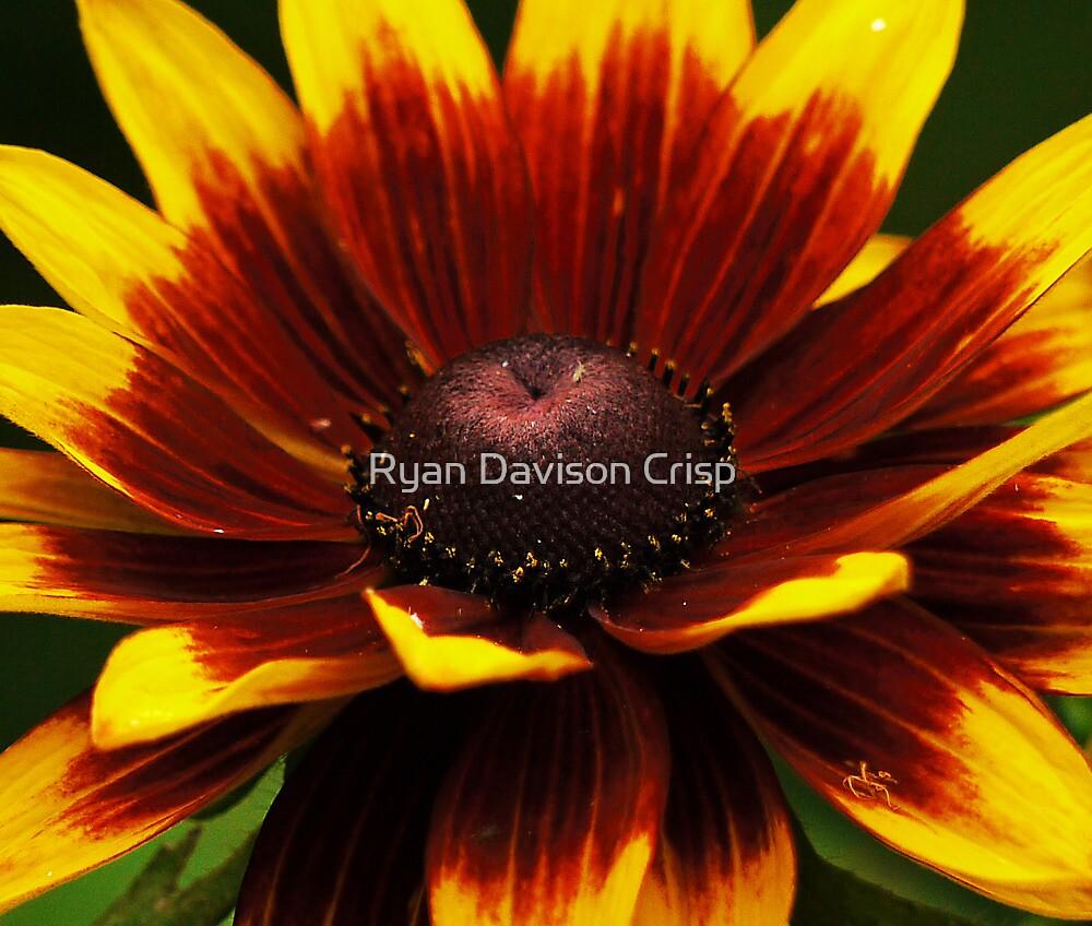 Summer Revisited by Ryan Davison Crisp