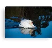 Strong Swan Canvas Print