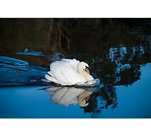 Strong Swan Photographic Print