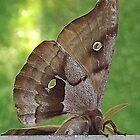 Chubby Fuzzy Moth by Rusty Katchmer