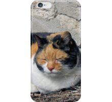 Stray Cat iPhone Case/Skin
