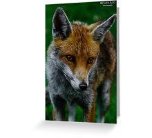 Prowling Fox Greeting Card