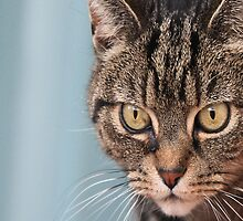 The Hunter - A Tabby Cat about to Pounce by simpsonvisuals