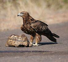 Tawny Eagle's feast by Jo McGowan