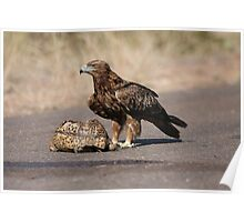 Tawny Eagle's feast Poster