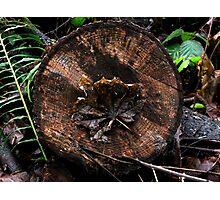 Bullseye Leaf Photographic Print