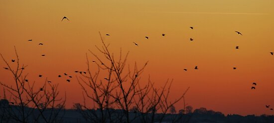 Home to roost ! by Phil Mitchell