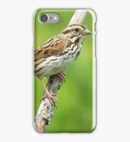 The Song Sparrow iPhone Case/Skin