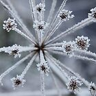 Crystallized by Penny V-P