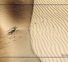 Life on the Desert Dunes by PhotoWorks