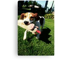 Dog with Toy Canvas Print