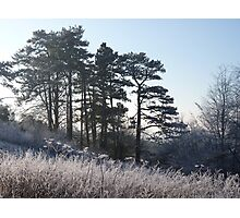 Frosty Hillside Photographic Print