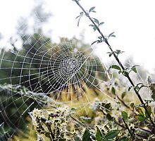 spider's web and dew by angimoo