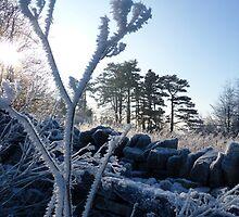 Winter Winds by Tom Clancy