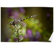 Wet Season Dragonfly Poster