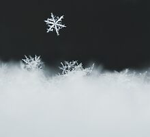 Winter by TickerGirl