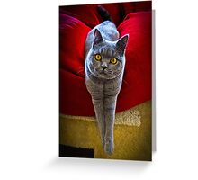 I'm a Super Model (you know what I mean) Greeting Card