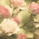 Shades of Pink by SylviaCook