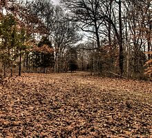 Natchez Trace by Terence Russell