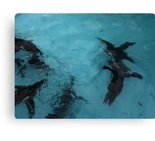 Under water: flying Canvas Print