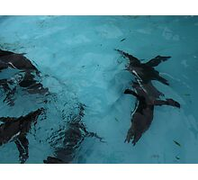 Under water: flying Photographic Print