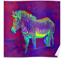 neon zebra Poster