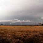 Storm across the field by wolfcat