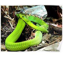 Green Mamba Poster
