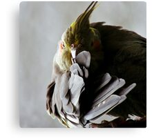 Clucky in the Studio Canvas Print