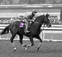 Breeders' Cup Classic World Champion Zenyatta by caqphotography