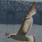 Seagull by the Tappan Zee Bridge by quiltmaker