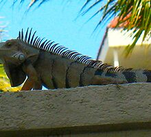 Monster Iguana by MarianBendeth