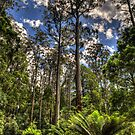 Forrest Elders (The Perspective - How Big Are Those Trees ?) - The Otways National Park - The HDR Experience by Philip Johnson
