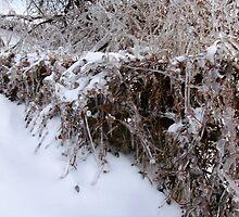 Icy Fence by maragoldlady