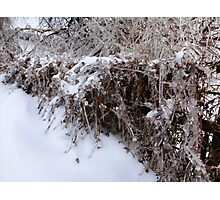 Icy Fence Photographic Print