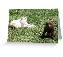 Come back puppy , I was only playing.......... Greeting Card