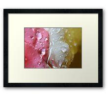 Droplets 11 - Neopolitan IceCream Framed Print